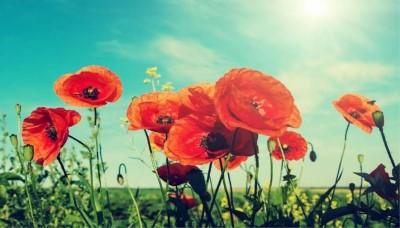 9 květin pro rozkvetlý celý rok