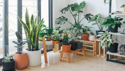9 pokojových rostlin, které se skvěle hodí do vašeho bytu