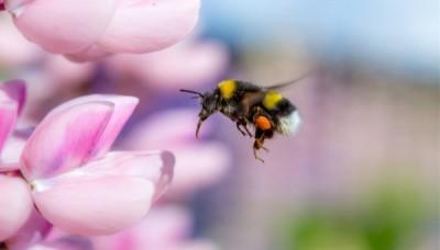Čmeláci, vosy a další příbuzní včel