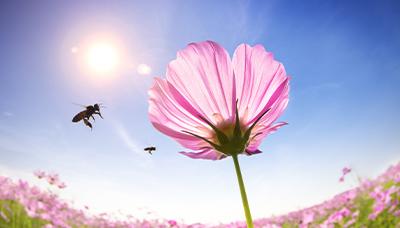 Co se děje v úlu