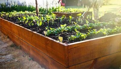 Jak pěstovat zeleninu ve vysokém záhonu