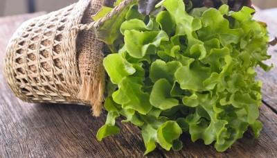 Jak úspěšně předpěstovat sazenice zeleniny