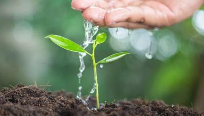Nádrž na dešťovou vodu pomůže přírodě i vaší peněžence