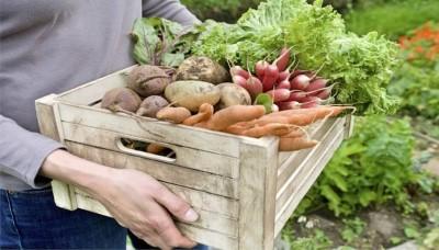 Kalendář pěstování zeleniny