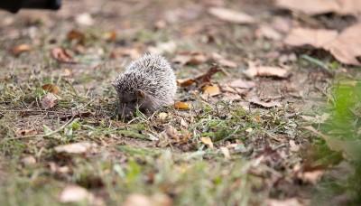 Pomozte zvířatům přečkat zimu na vaší zahradě