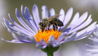 Proč jsou včely tak důležité a co je ohrožuje