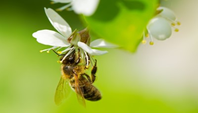Proměňte svoji zahradu v ráj pro včelky