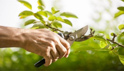 Správný řez okrasných stromů a keřů
