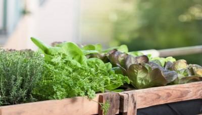 Vypěstujte si na balkóně vlastní zeleninu