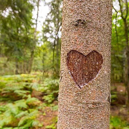 Strom je živý organismus. Nepoškozujte stromy