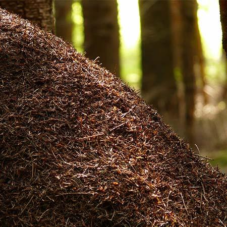 Neničte domov mravenců