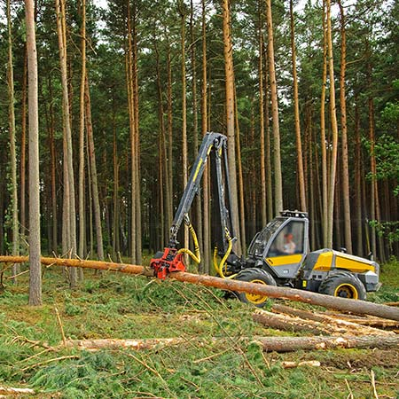 Harvestor při práci v lese