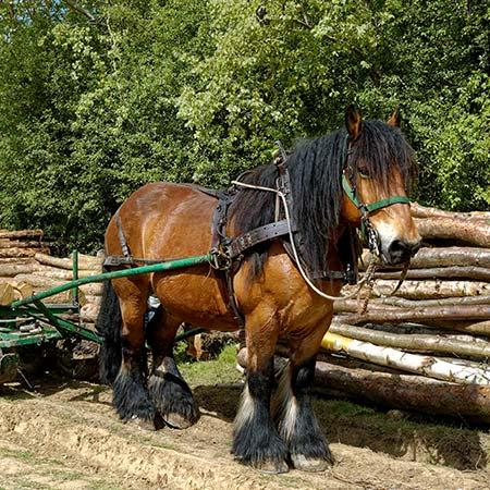Koně pracují v lese