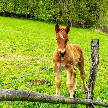 Speciální výcvik koňů pracujících v lese